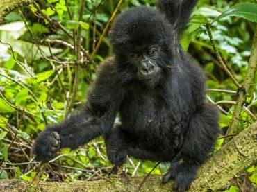 Virunga National Park Travel Guide