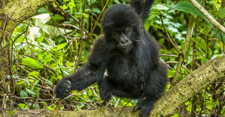 Virunga National Park Travel Guide